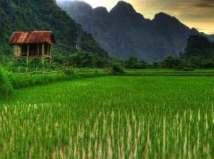 Riziculture asiatique